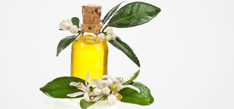 Amyris 10 Amazing Benefits Of Amyris Essential Oil