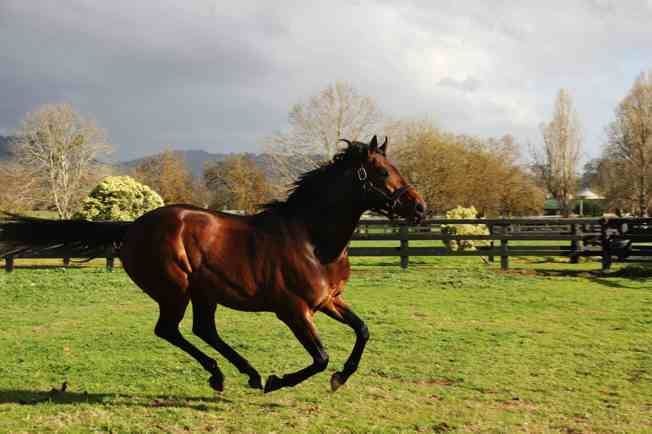 Anabaa Anabaa39s the granddaddy of them all Chatswood Stud