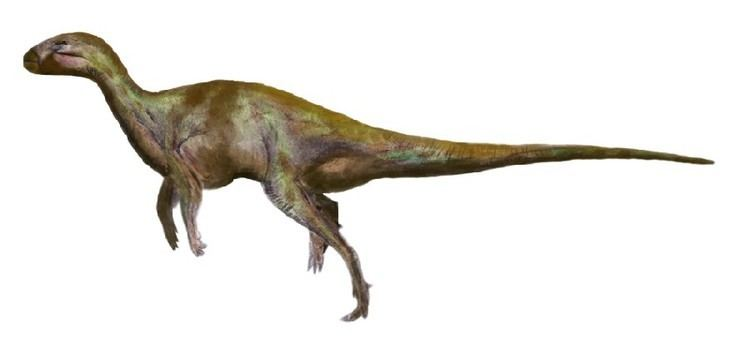 Anabisetia Anabisetia Pictures amp Facts The Dinosaur Database