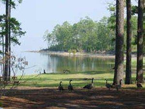Anacoco, Louisiana wwwrvresortstodaycomimgcampgrounds101853jpg