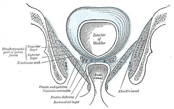 Anal fascia