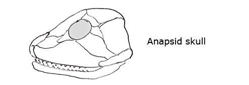 Anapsid startpage