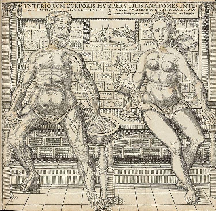 Anatomical fugitive sheet