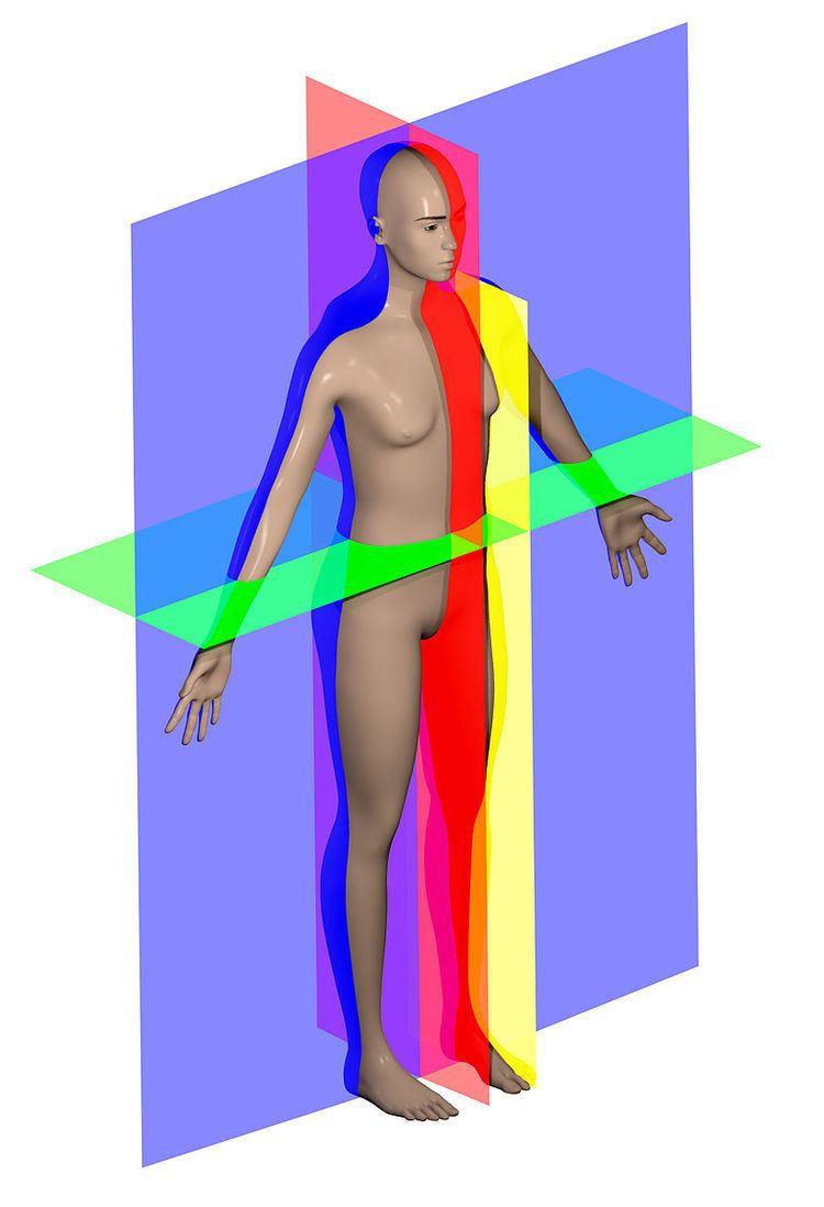Anatomical plane