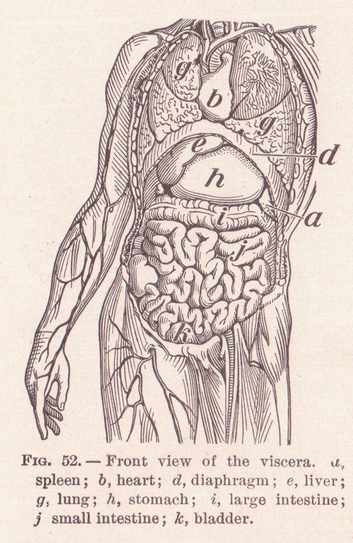 Anatomical terms of bone