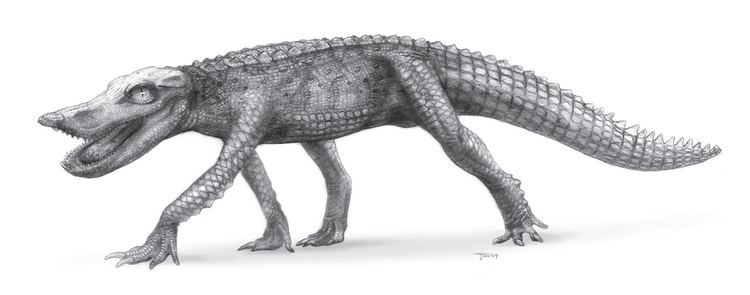 Anatosuchus FileAnatosuchusjpg Wikimedia Commons
