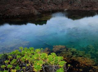 Anchialine pool Hawaiian Anchialine Pools