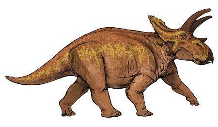 Anchiceratops Anchiceratops Dinosaur Facts information about the dinosaur