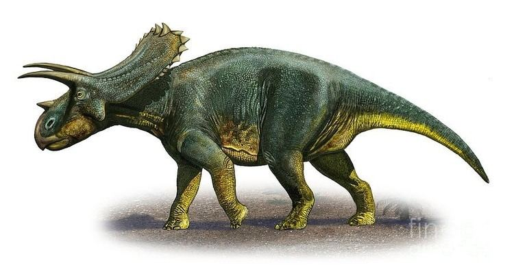 Anchiceratops Anchiceratops Pictures amp Facts The Dinosaur Database