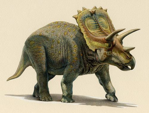 Anchiceratops Anchiceratops Dinosaur Gallery posters Dinosaurs Extinction
