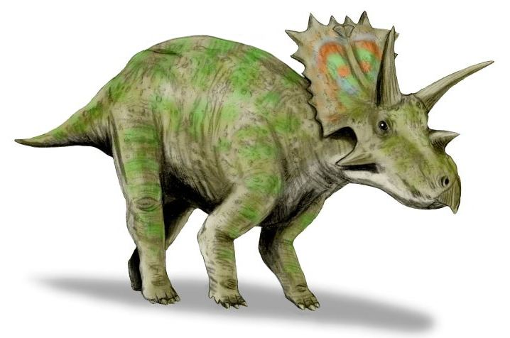 Anchiceratops httpsuploadwikimediaorgwikipediacommons33