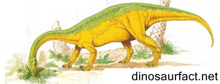 Anchisaurus Anchisaurus dinosaur