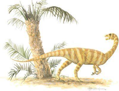 Anchisaurus Anchisaurus HowStuffWorks