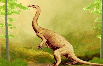 Anchisaurus Anchisaurus dinosaur facts pictures Anchisaurus information