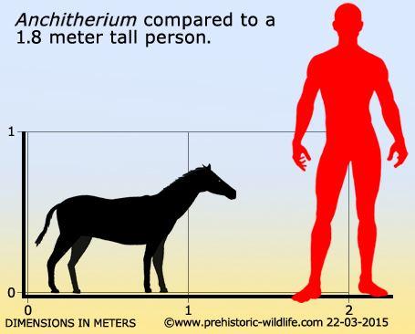 Anchitherium wwwprehistoricwildlifecomimagesspeciesaanch