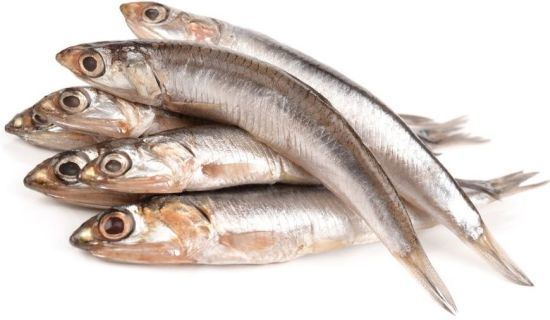 Anchovy Anchovy NutraWiki