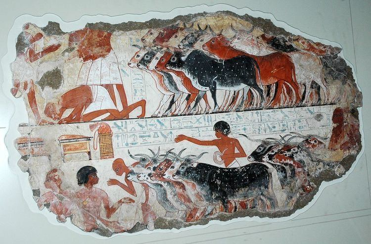 Ancient Egyptian cattle