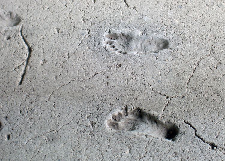 Ancient footprints of Acahualinca httpsuploadwikimediaorgwikipediacommonsee