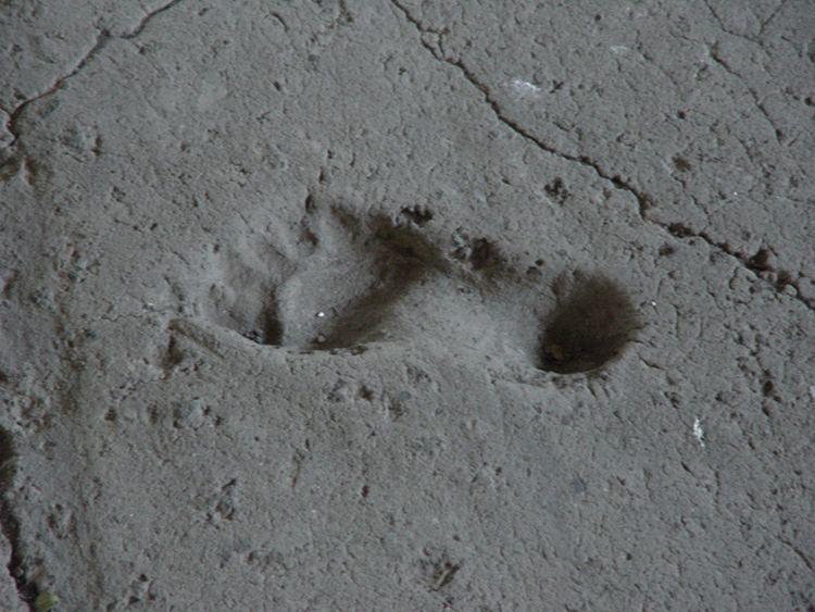 Ancient footprints of Acahualinca Trip Photos Nicaragua and Costa Rica 20082009