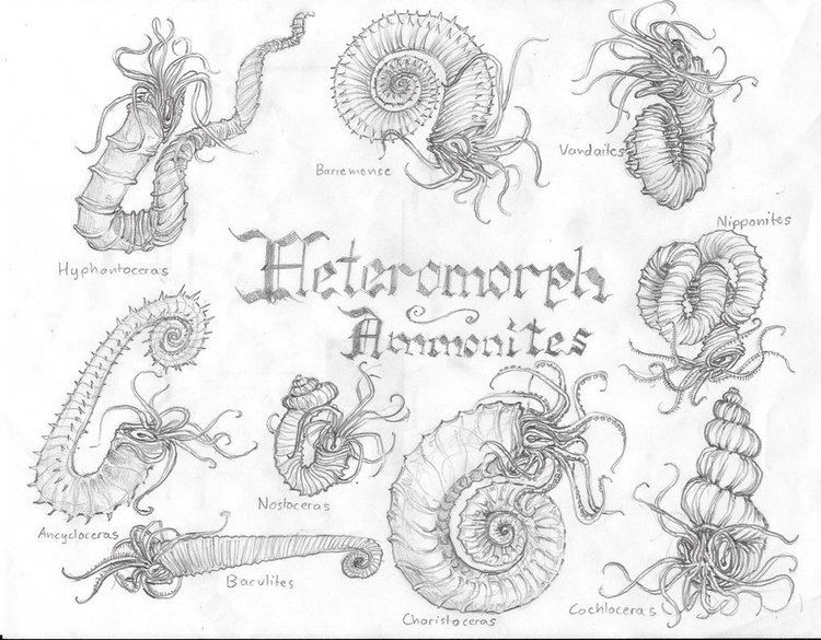 Ancyloceratina Ancyloceratina by karkharokles on DeviantArt