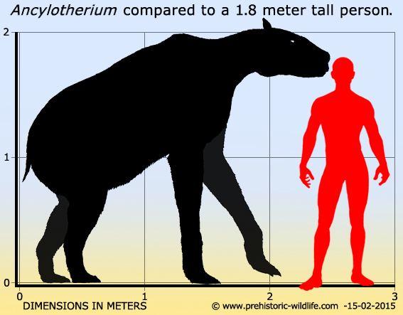 Ancylotherium wwwprehistoricwildlifecomimagesspeciesaancy