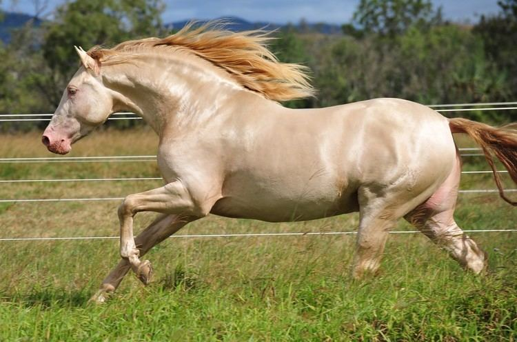 Andalusian horse Horse Talk TV Road Tests the Andalusian Horse Majestic Spanish