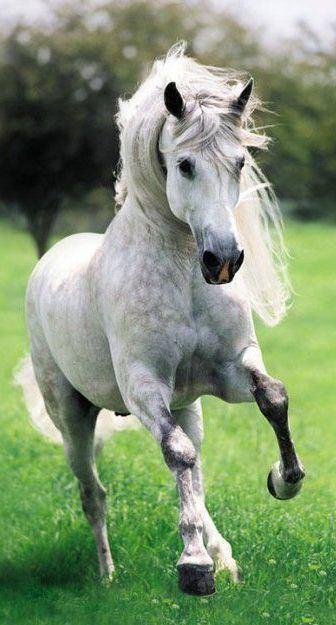 Andalusian horse httpssmediacacheak0pinimgcom736x724c3b