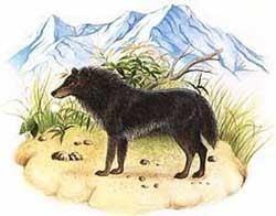 Andean wolf wwwmetareligioncomParanormaleCryptozoologyim
