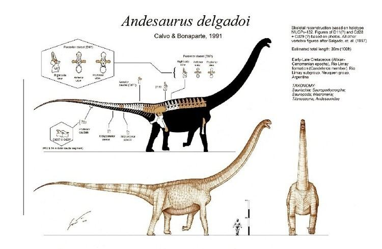 Andesaurus Andesaurus Pictures amp Facts The Dinosaur Database