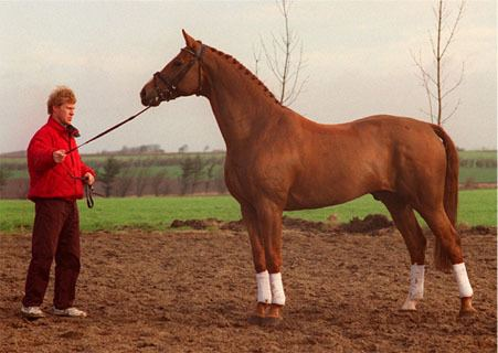 Andiamo (horse) wwwsuperiorequinesirescomstallionsandiamoconfjpg