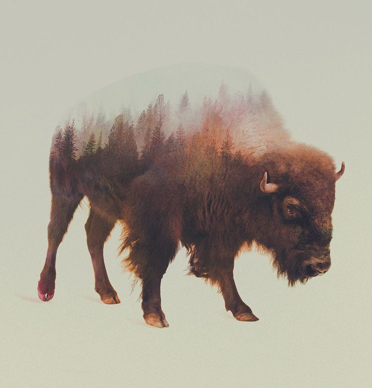 Andreas Lie Double Exposure Animal Portraits by Andreas Lie Colossal