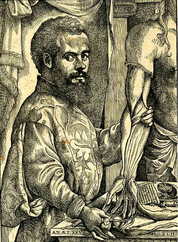 Andreas Vesalius Andreas Vesalius Wikipedia