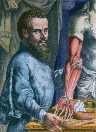 Andreas Vesalius Andreas Vesalius Belgian physician Britannicacom