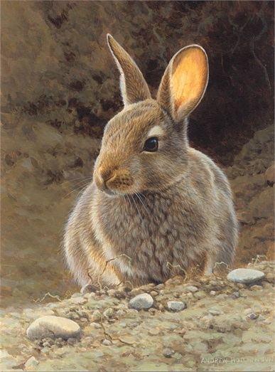 Andrew Hutchinson Andrew Hutchinson Illustration Portfolio Wildlife and Countryside