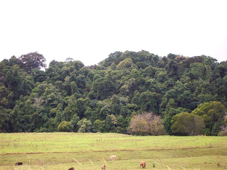 Andrew Johnston Big Scrub Nature Reserve
