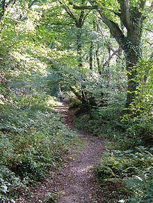 Andrew's Wood httpsuploadwikimediaorgwikipediacommonsthu