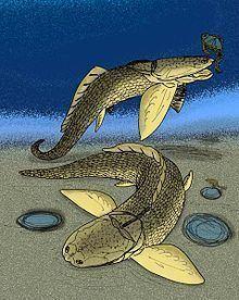 Angarichthys httpsuploadwikimediaorgwikipediacommonsthu