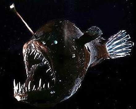 Anglerfish wwwfactzoocomsitesallimgfishanglerfishangl