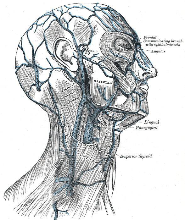 Angular vein