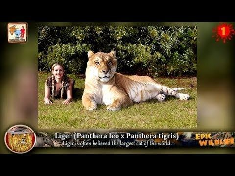 Animal 13 Amazing Animal Hybrids YouTube