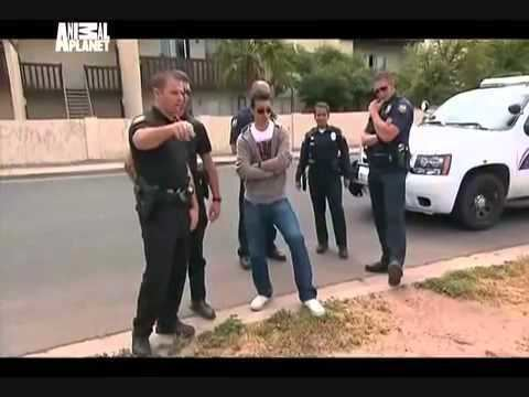 Animal Cops: Phoenix Animal Cops Phoenix Criminal Intent pt 1 YouTube