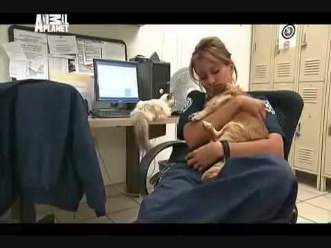 Animal Cops: Phoenix Animal Cops Phoenix Criminal Intent pt 3 YouTube