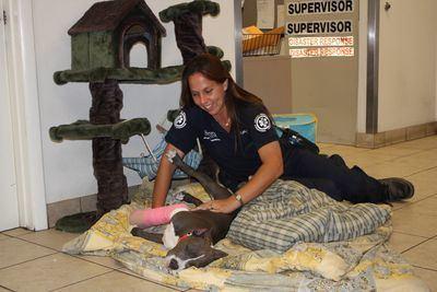 animal cops detroit full episodes