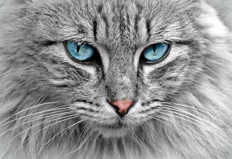 Animal Animal Pictures Pexels Free Stock Photos