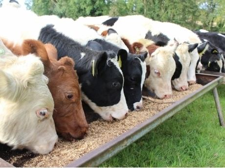 Animal feed Animal Feed Ireland Cattle Sheep Feed Horse Ewe Lamb Nuts Pellets