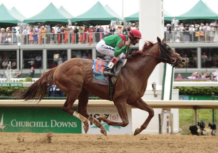Animal Kingdom (horse) Youngstown39s Bruce Zoldan still celebrating Kentucky Derby triumph