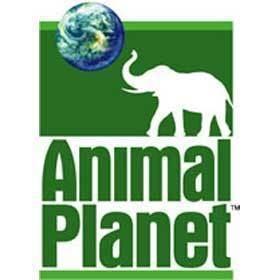 Animal Planet ANIMAL PLANET Orange Model Management Inc
