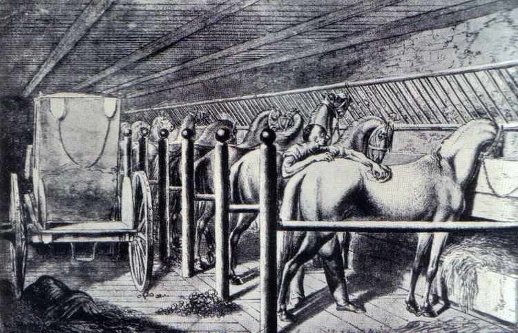 Animal stall