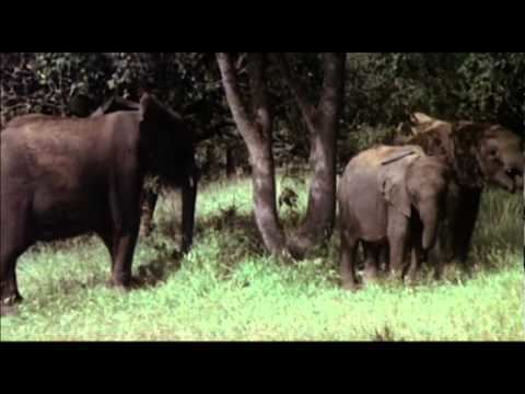 Animals Are Beautiful People Animals Are Beautiful People Original Theatrical Trailer YouTube
