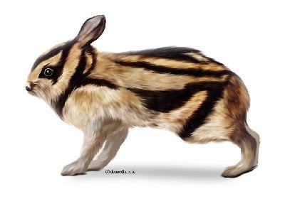Annamite striped rabbit Species New to Science Mammalogy 2000 Nesolagus timminsi